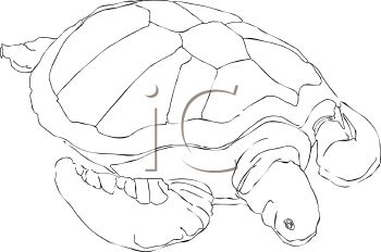 picture of a turtle in black and white in a vector clip art illustration