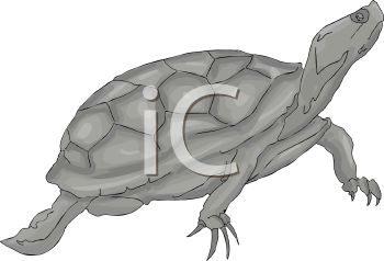 picture of a turtle in grayscale in a vector clip art illustration