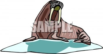 picture of a walrus laying down in a vector clip art illustration