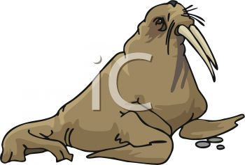 picture of a cartoon walrus in a vector clip art illustration