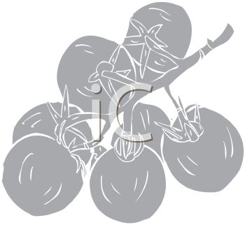 picture of tomatoes on the vine in grayscale in a vector clip art illustration