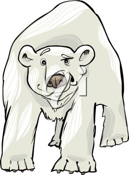picture of an adult polar bear cartoon on a white background in a vector clip art illustration