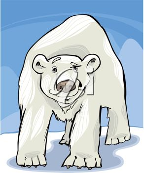 picture of an adult polar bear in the snow with blue skies in a vector clip art illustration