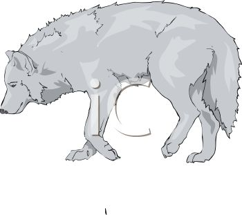 picture of a wolf walking on a white background in a vector clip art illustration