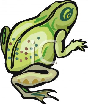 picture of a frog on a white background in a vector clip art illustration