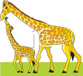 picture of a mother giraffe and her calf. She is feeding her calf greens in a vector clip art illustration