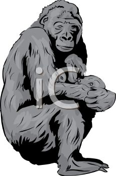 picture of a mother gorilla nursing her baby in a vector clip art illustration