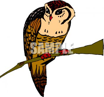 picture of an owl sitting on a perch in a vector clip art illustration