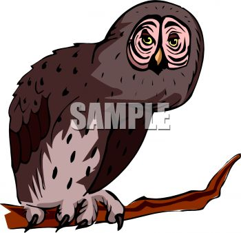 picture of a cartoon of an owl in a vector clip art illustration