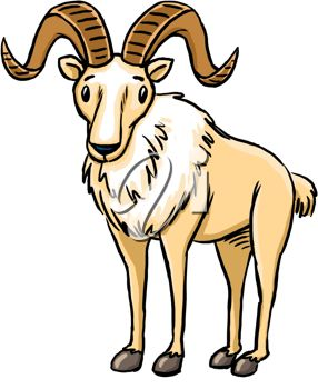 picture of a goat with big wide curved horns in a vector clip art illustration