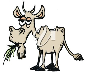 picture of a goat chewing on grass in a vector clip art illustration