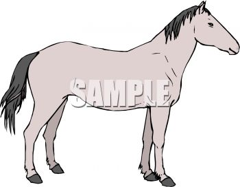 picture of a horse on a white background in a vector clip art illustration