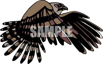 picture of a hawk flying in a vector clip art illustration