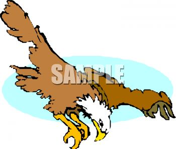 picture of a hawk flying  ready to dive into his prety in a vector clip art illustration