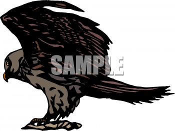 picture of a hawk standing on a perch in a vector clip art illustration