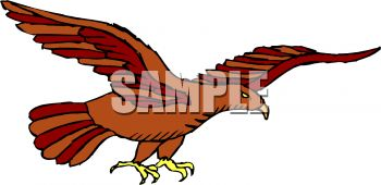 picture of hawk gliding through the air in a vector clip art illustration
