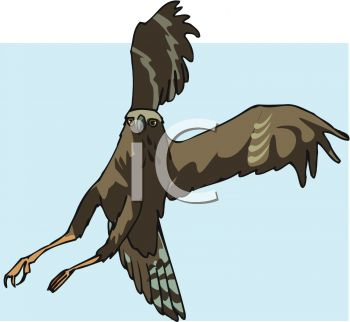 picture of a hawk preparing to land in a vector clip art illustration