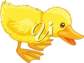 picture of a cute fuzzy back duck in a vector clip art illustration