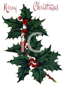 picture of a piece of holly with berries in a vector clip art illustration