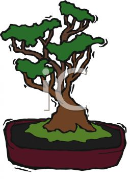picture of a bonsai tree in a planter in a vector clip art illustration