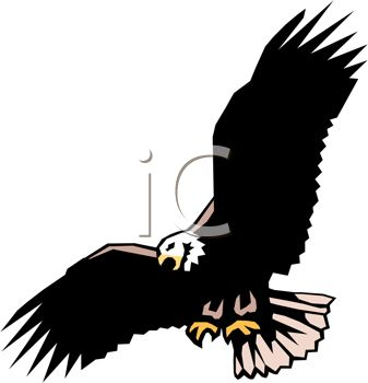 picture of a bald eagle soaring through the sky in a vector clip art illustration