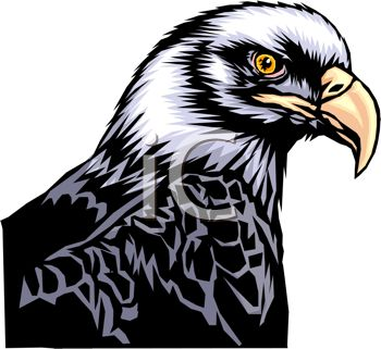 picture of the head of a bald eagle in a vector clip art illustration
