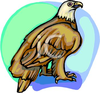 picture of a bald eagle standing on a perch with a blue background in a vector clip art illustration