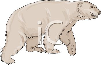 picture of a white polar bear walking in a vector clip art illustration