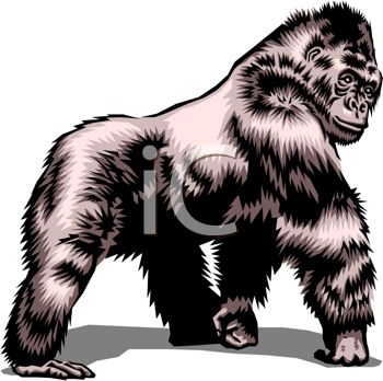 picture of a gorilla walking on a white background in a vector clip art llustration