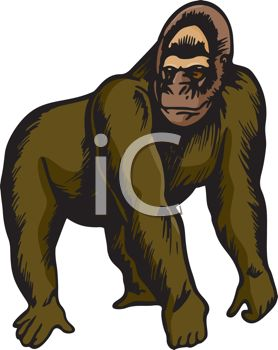 picture of a  gorilla standing on a white background in a vector clip art llustration