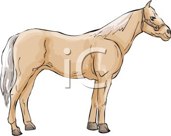 picture of a palamino horse standing on a white background in a vector clip art illustration