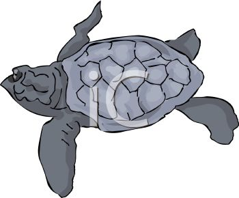 picture of a sea turtle on a white background swimming in a vector clip art illustration