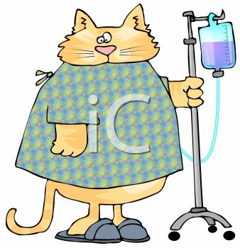 picture of a chubby cat wearing a hospital gown hooked up to an I.V in a vector clip art illustration