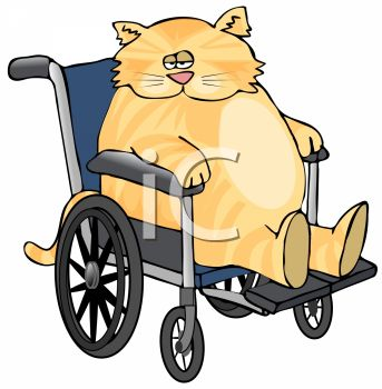 picture of a chubby cat sitting in a wheelchair in a vector clip art illustration