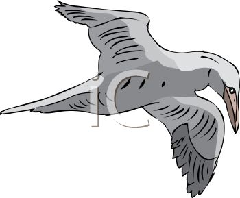 picture of a bird flying in a vector clip art illustration
