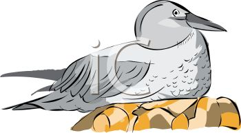 picture of a bird sitting on eggs in a vector clip art illustration