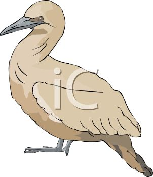 picture of a bird in a vector clip art illustration