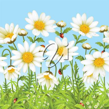Daisies and Ladybugs