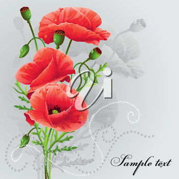 A poppy on a grey background