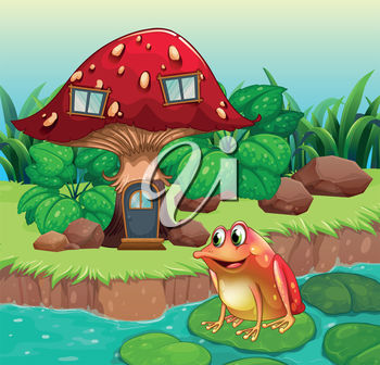 A toadstool and a frog