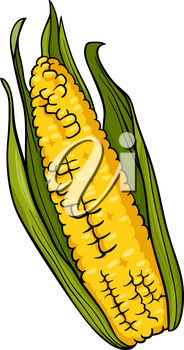 A cob of corn