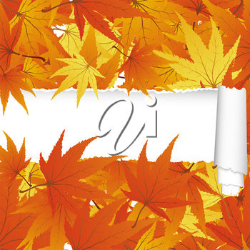 Maple leaf paper