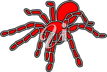 A red spider
