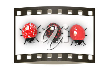Three ladybugs on film