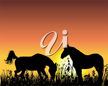 Silhouetted wild horses