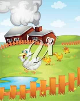 A barnyard with ducks