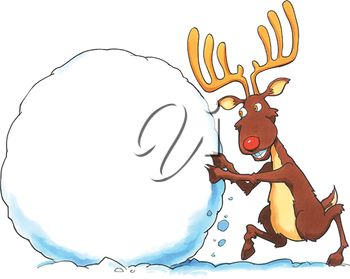 A reindeer making a large snowball