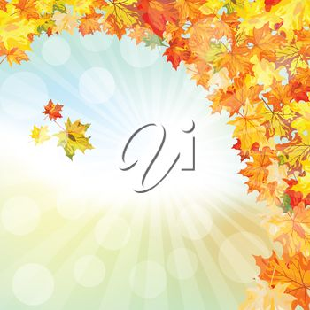 Brightly colored Fall leaves Illustration