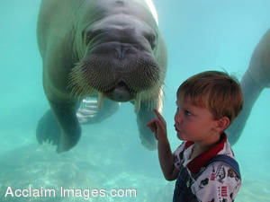 Boy and Walrus Stock Photo