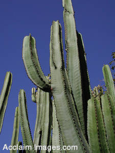 Stock Photo of a lot of Cactus
